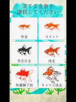 Screenshot 4: 癒しの金魚育成ゲーム