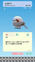Screenshot 4: とりおっち2 -モフモフな小鳥を集めよう!-