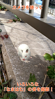 Screenshot 4: Life with hamster