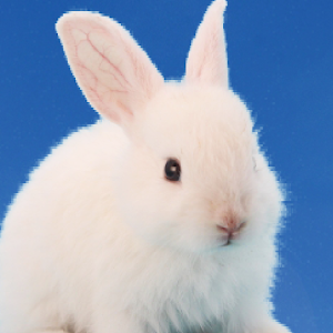 Icon: 兔子育成